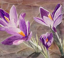 Purple Crocuses, Signs of Spring by Teddie McConnell