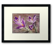 Purple Crocuses, Signs of Spring Framed Print