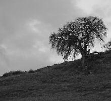 B/W Old Tree on Hill by lightportal
