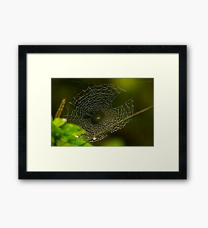 Wet web Framed Print
