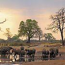 Sundowners by Explorations Africa Dan MacKenzie