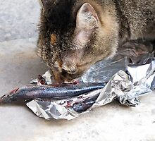 cat eats fish by Anne Scantlebury