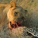Pre dinner appetizer by Explorations Africa Dan MacKenzie