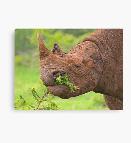 Black rhino - Imfolozi, South Africa Canvas Print