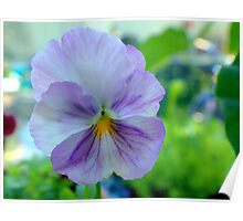 A Perfect Pansy Poster
