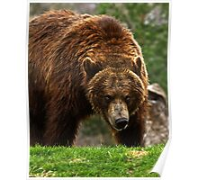 Backwoods Grizzly Poster