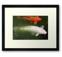 Super Koi Framed Print