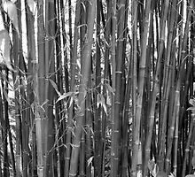 Bamboo in Black and White by arr333