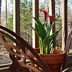 Lily on the deck by Virginian Photography (Judy)