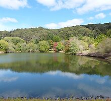 Autumn Leaves & green reflect with cloud! Mt. Lofty Botanic gdns.Adelaide. by Rita Blom