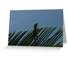 Anole Watching From A Sago Greeting Card