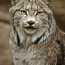 The Lynxster by Scott Denny