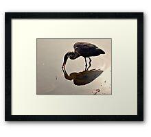 Great Blue Heron at Grover Cleveland Park, Essex Fells NJ - reflections1 Framed Print