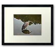 Great Blue Heron at Grover Cleveland Park, Essex Fells NJ - reflections2 Framed Print
