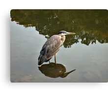 Great Blue Heron at Grover Cleveland Park, Essex Fells NJ - reflections2 Canvas Print