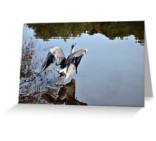 Great Blue Heron at Grover Cleveland Park, Essex Fells NJ - reflections3 Greeting Card