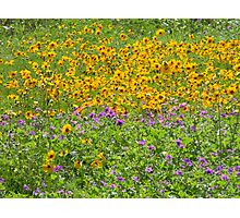 Wild and Bright! Photographic Print