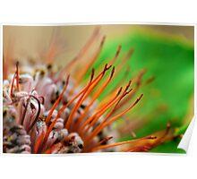 Macro Flower 1 Poster