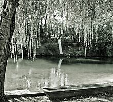 Water, Light, Willow by Jane Keats