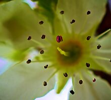 Macro Flower 4 by D-GaP