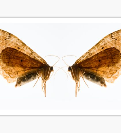 Insect Wings Macro - Profile Sticker