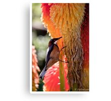Bird of colours Canvas Print