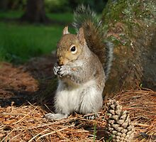 The Squirrel  by Declan Carr