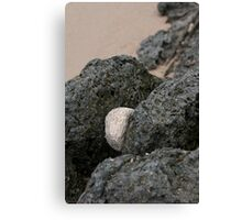 Wedged In Reef Rock Canvas Print
