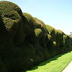 Wobbly Hedge at Montacute House by lezvee