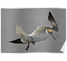 Gannet Landing Poster