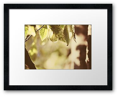 Photograph for sale, photographs for sale, prints for sale, leaves photo, leaves photographs,