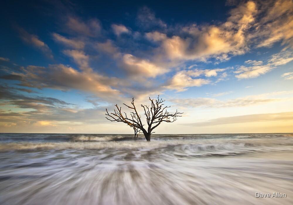 Charleston SC Botany Bay Edisto Island - Alone by Dave Allen