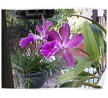 Backyard Orchid Poster