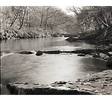 Tree-lined Tranquility Photographic Print