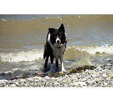 Indy and the Waves Photographic Print