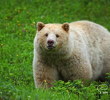 Spirit Bear by EagleHunter