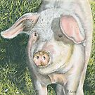 Mucky Pig! by FranEvans