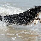 Sea Dog by FelicityB