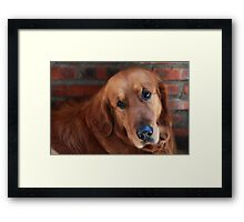 My lovely dog name is Cao Cao曹操 Framed Print