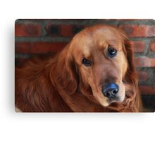 My lovely dog name is Cao Cao曹操 Canvas Print