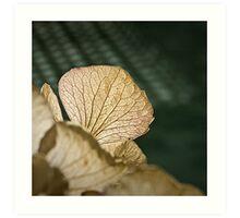 Dried Hortensia Art Print