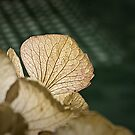 Dried Hortensia by Patrick Reinquin