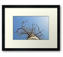 My Father's Maple tree Framed Print