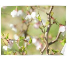 marshmallow pink Poster