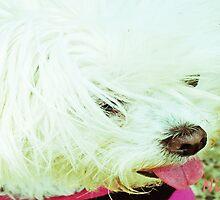 Dogs-Lola by NIKULETSH