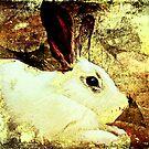 animal-Rabbit by NIKULETSH