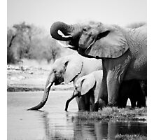 Namibia: Elephants Photographic Print