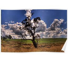 Solitary - Along A Country Road Harden, Riverina NSW - The HDR Experience Poster