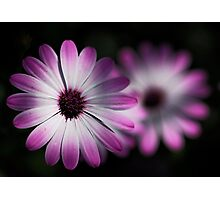 Daisy Double  Photographic Print