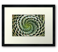 spiral aloe - lesotho's endangered species Framed Print